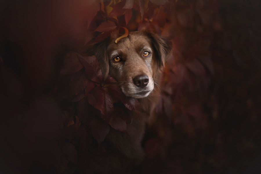 beautiful soul. by Anne Geier on 500px.com