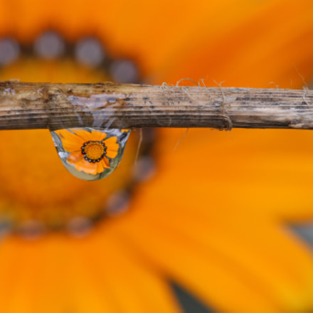 Fiore Arancione Riflesso