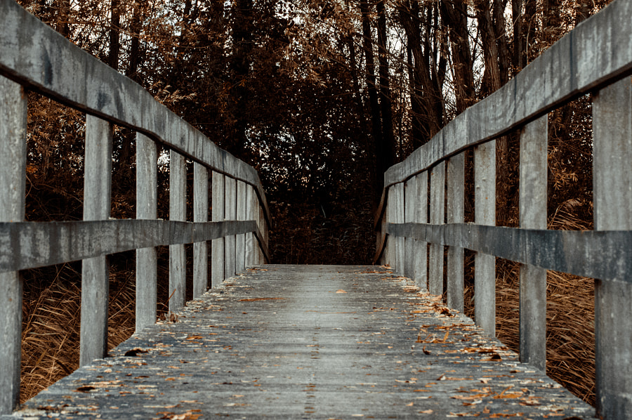 Wooden Bridge by Philip van Roeijen on 500px.com