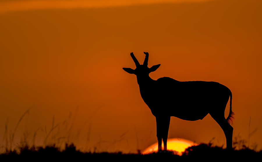 Assume the pace of Sun Rise by Afzal Karim on 500px.com