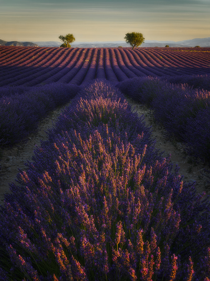 Valensole provence by Etienne Ruff on 500px.com