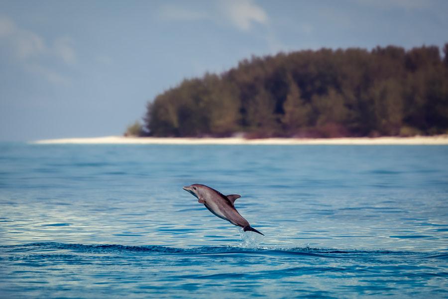 Dolphin jump by Furqan Ali on 500px.com
