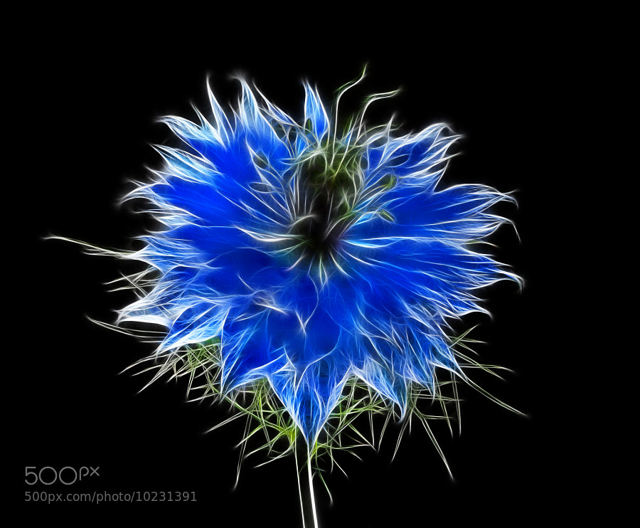 Photograph Blue by Jaroslava Melicharová on 500px