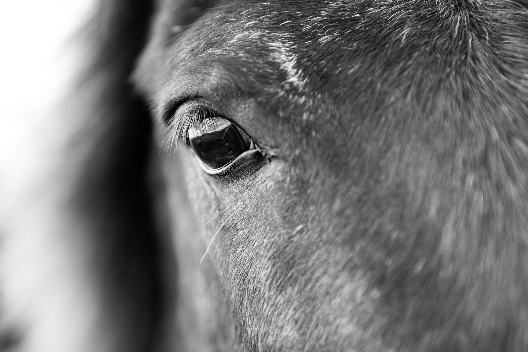 Photograph Have an eye on you... by Bent Marinosson on 500px