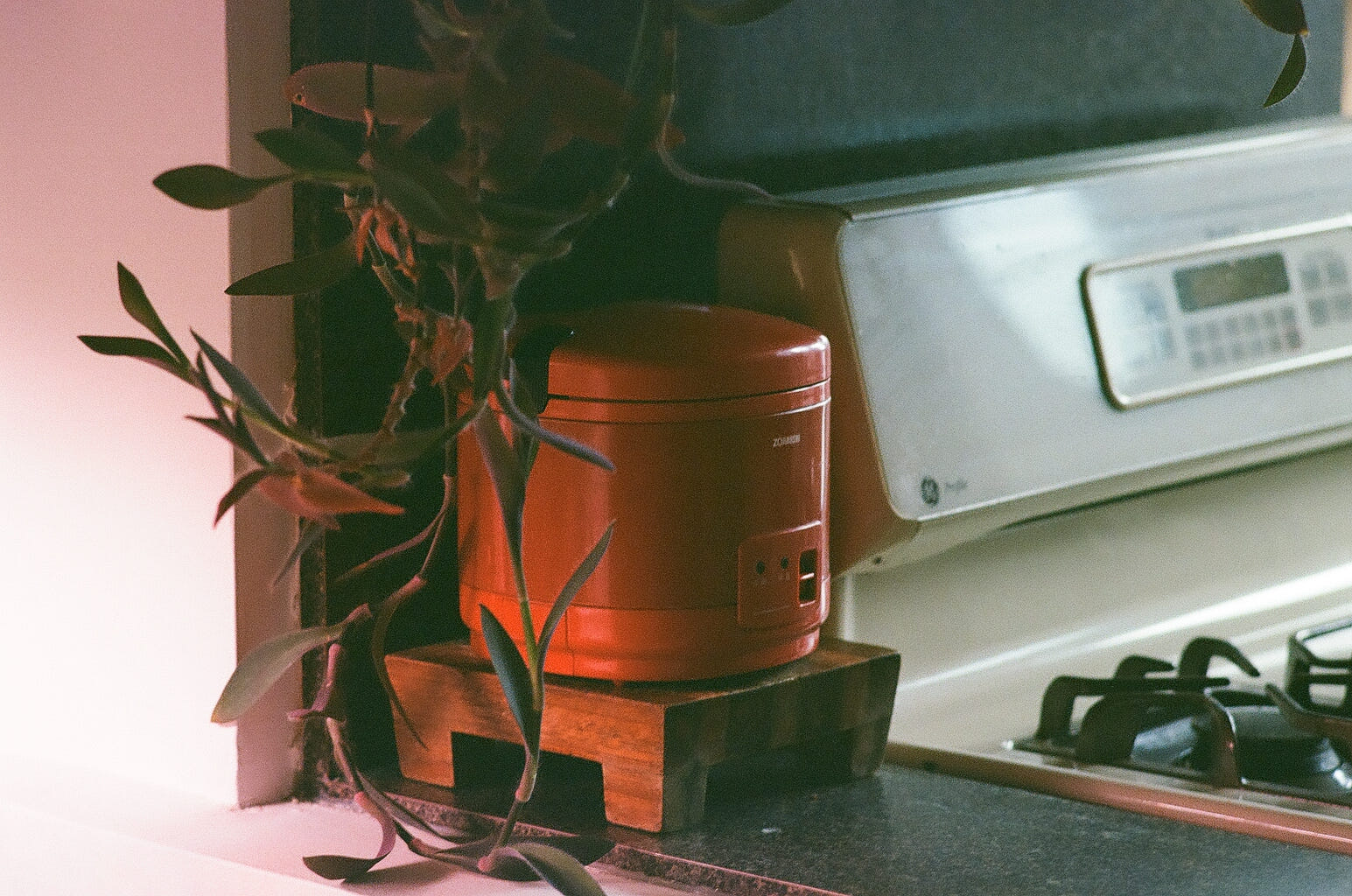 A red rice cooker sits on a small, wooden pallet, itself on a laminate countertop. In front hangs a purple and green wandering Jew. Behind, a gas stovetop.