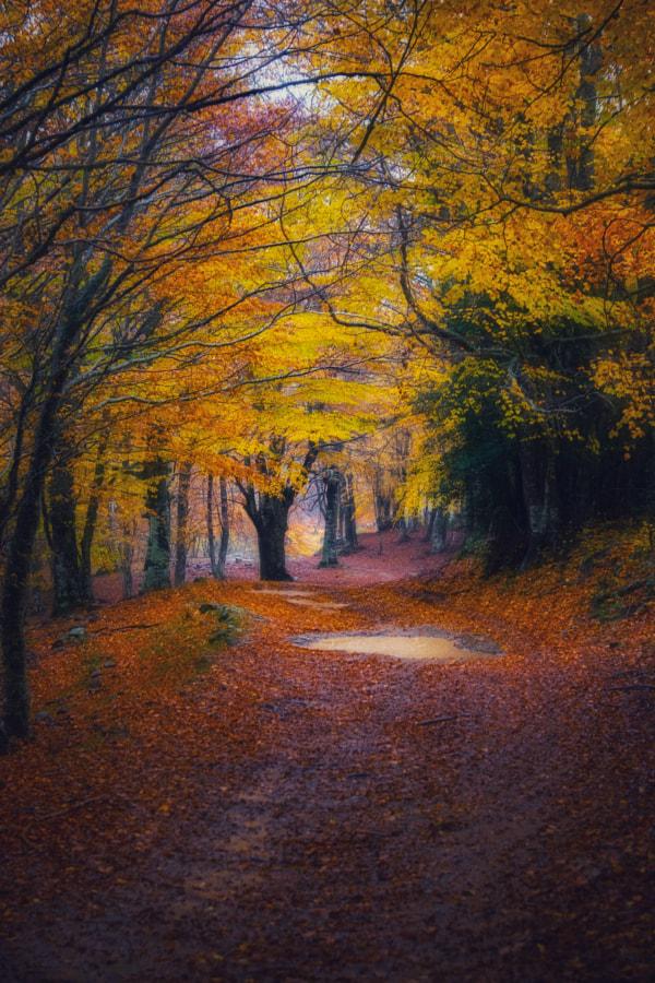 Autumn  by Larita Sarta on 500px.com
