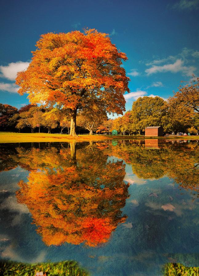 A colorful autumn day by Wojtek  on 500px.com