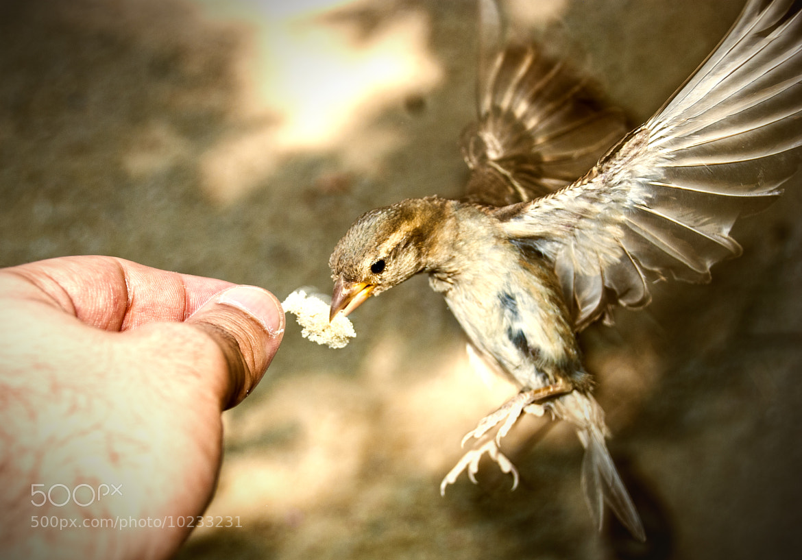Photograph Come pajarito by Jorge Planas on 500px