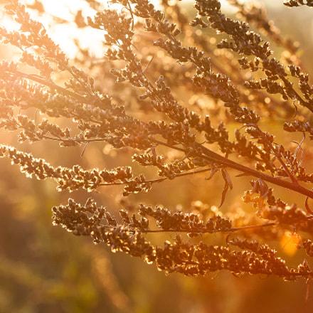 Мягкий свет осени