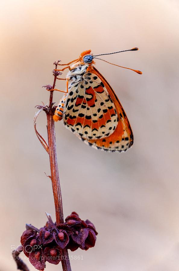 Photograph Insects by Jonatan Hernández Sánchez on 500px