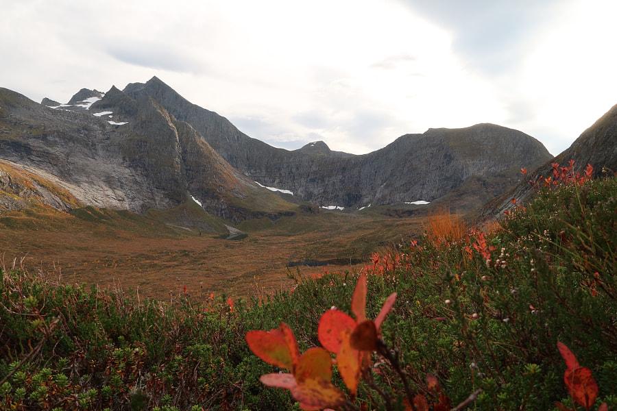 Autumn colors by Jan Sætre on 500px.com