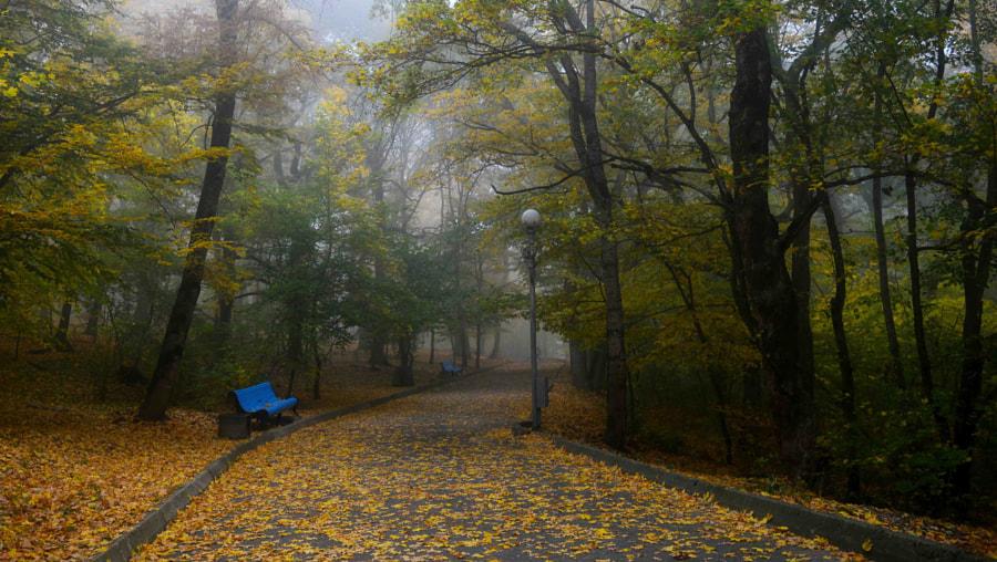 Утро в парке....... by Юрий Цыплятников on 500px.com