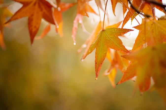 Autumn I by Giacomo della Sera