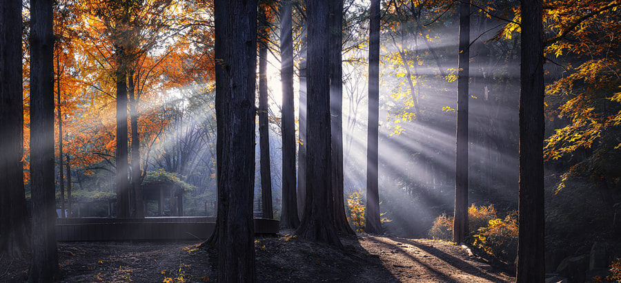 Morning Light by Tiger Seo on 500px.com