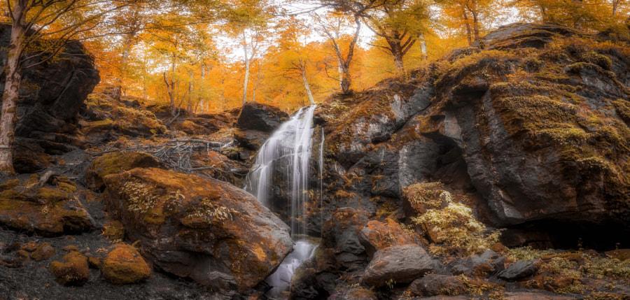 Orange forest by Dimo Hristev on 500px.com