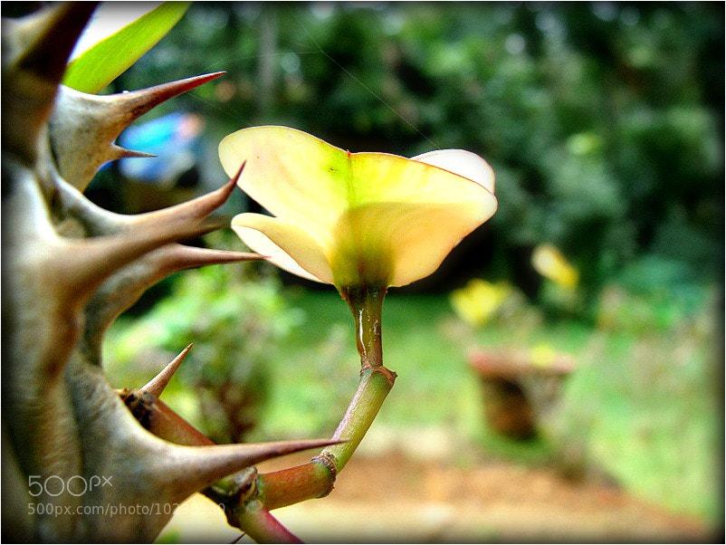 Photograph Beauty by Krishnendu Sarma on 500px