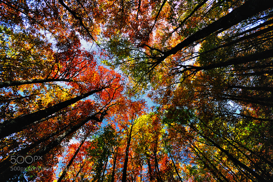 Autumn overwhelmed beech forest in North Velebit NP, Croatia