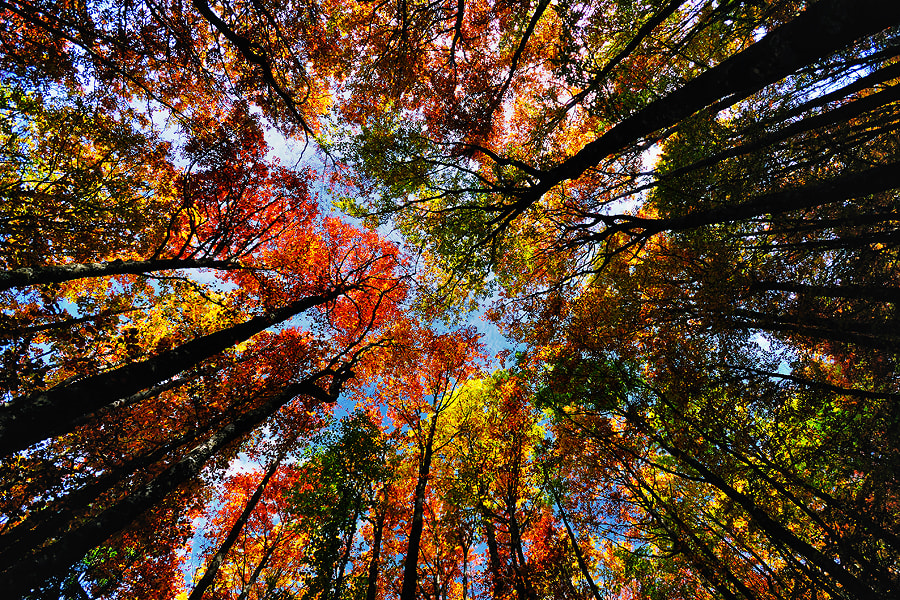 Autumn overwhelmed beech forest in North Velebit NP, Croatia