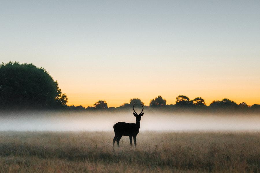 Richmond Park, before sunrise by Dom Piat on 500px.com