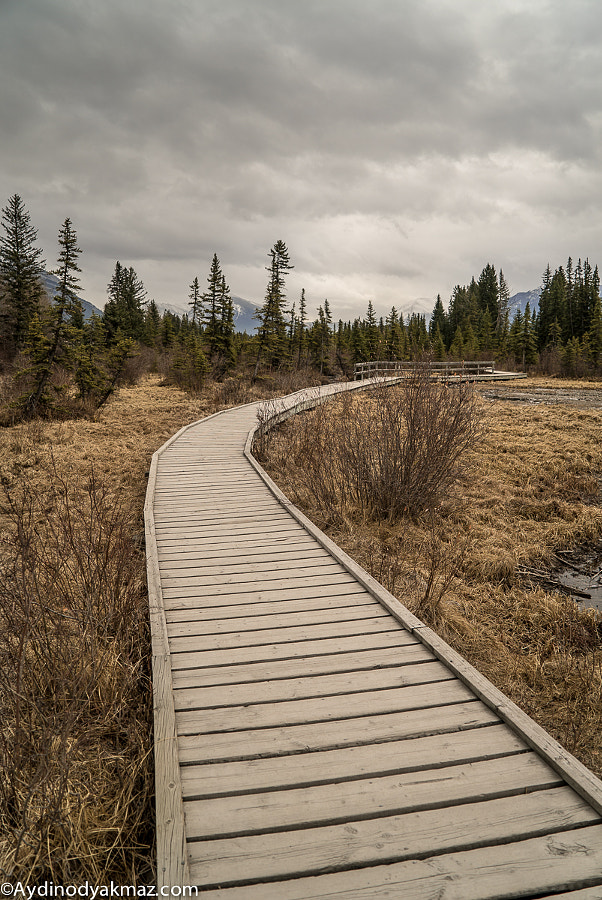 Creek Path - Canmore
