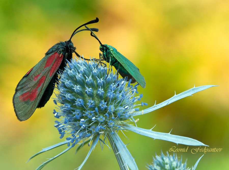 Photograph The July Macro Palette by Leonid Fedyantsev on 500px