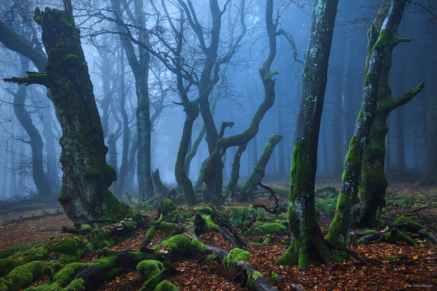 Mystic Wood by Kilian Schönberger on 500px.com