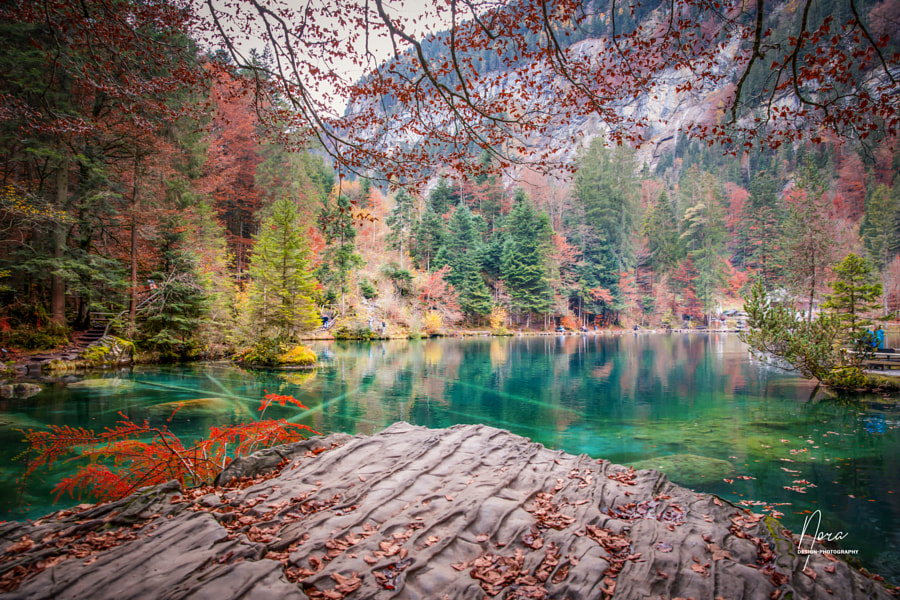 Herbst in Blausee by Leonora EM on 500px.com