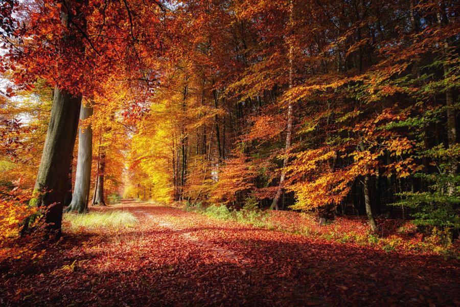 Forest Dream by Carsten Meyerdierks on 500px.com