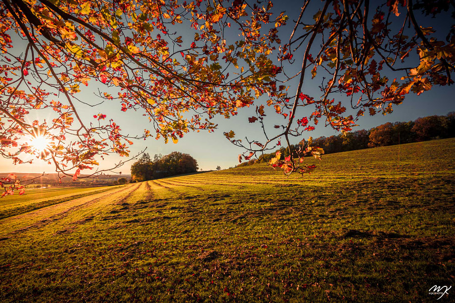 FALL IS GIVING ALL by Michael J. Kochniss on 500px.com