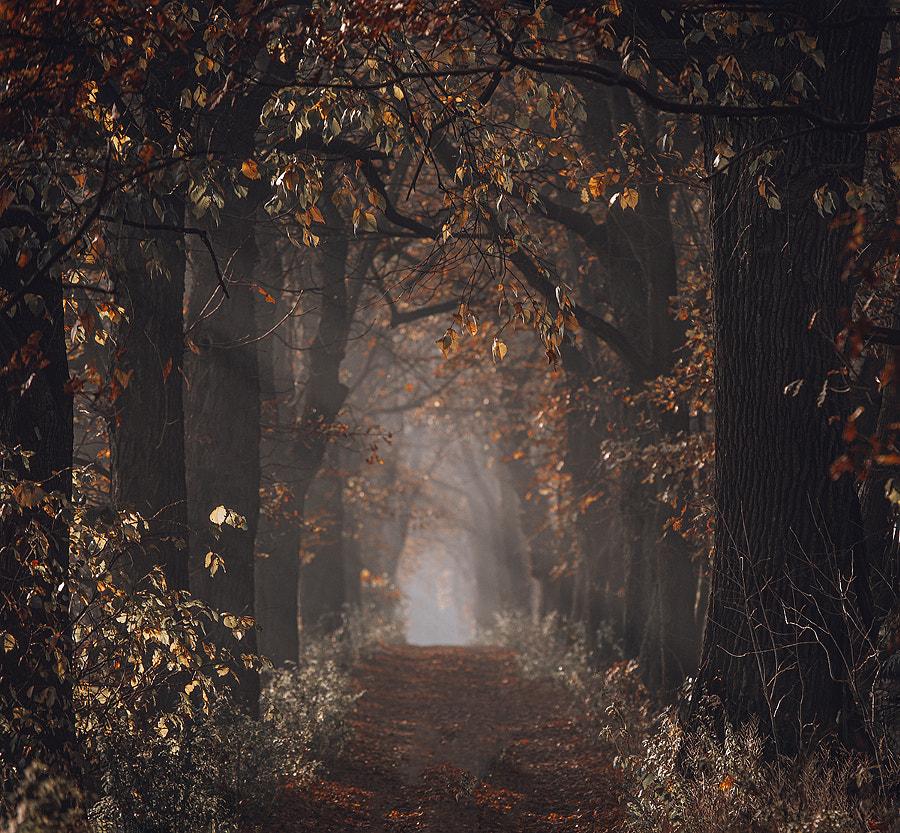 Autumn by Mycatherina on 500px.com