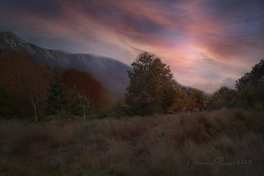 Autumn by Narcís Ros on 500px.com