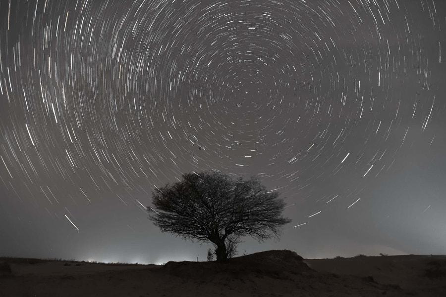 好大一棵树 by 武一山  on 500px.com