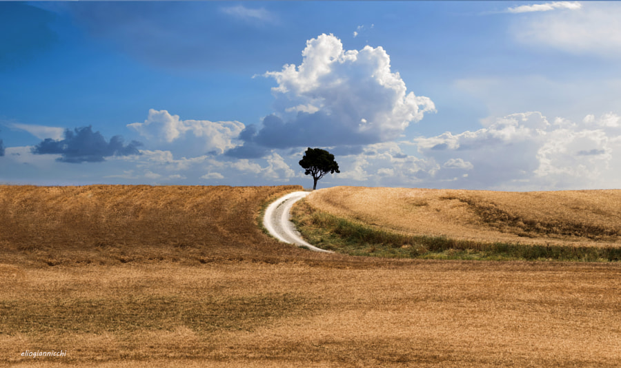 A Lonely Tree by Elio Giannicchi on 500px.com