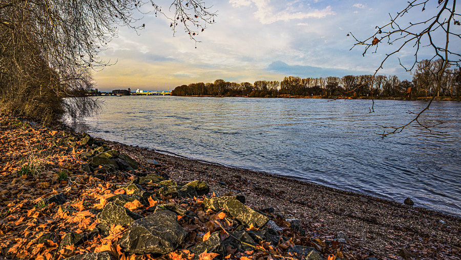 At the rhine during autumn  by 😉🙂 🇩🇪 Markus Dietz 🇪🇺😉🙂 on 500px.com
