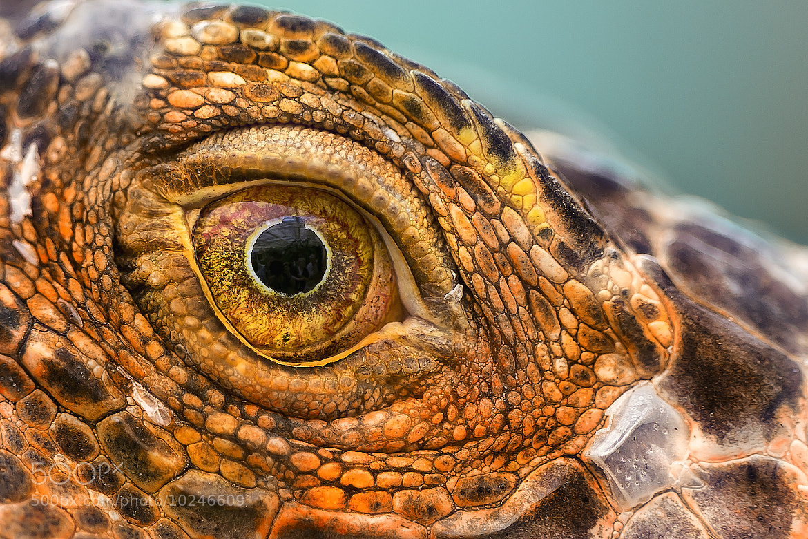 Photograph for your eyes only by Detlef Knapp on 500px