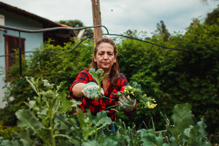 woman harvesting vegetable in her vegetable garden by Helena Lopes on 500px.com