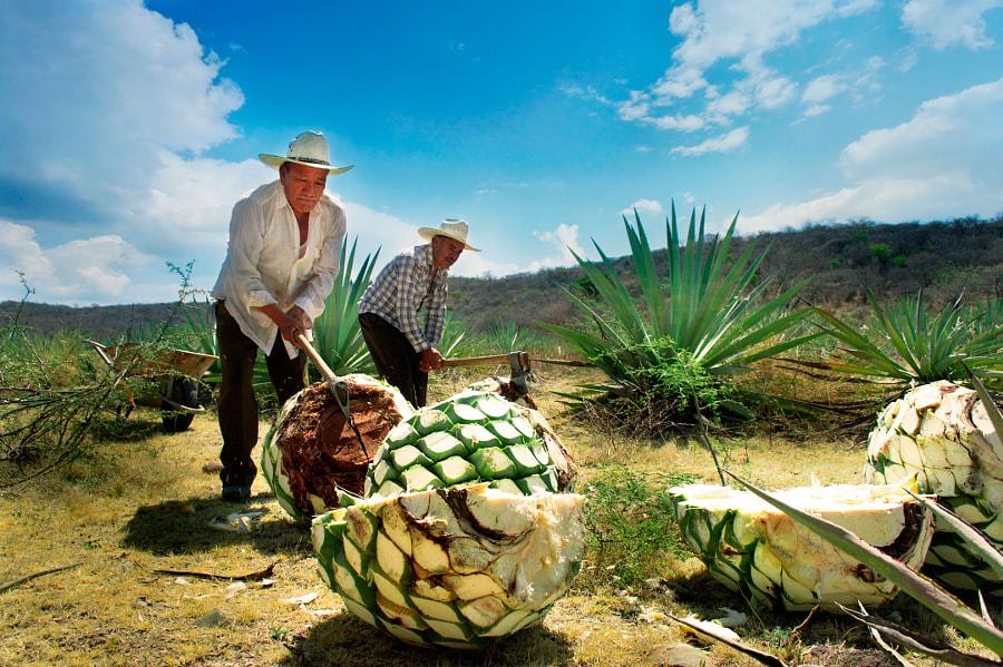 La cosecha III by Alejandro Guiberra on 500px.com
