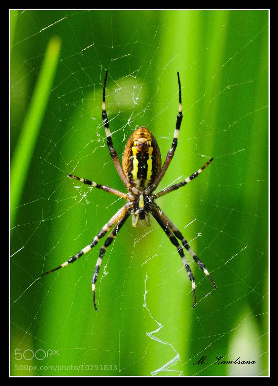 Photograph araña by miguel zambrana molina on 500px
