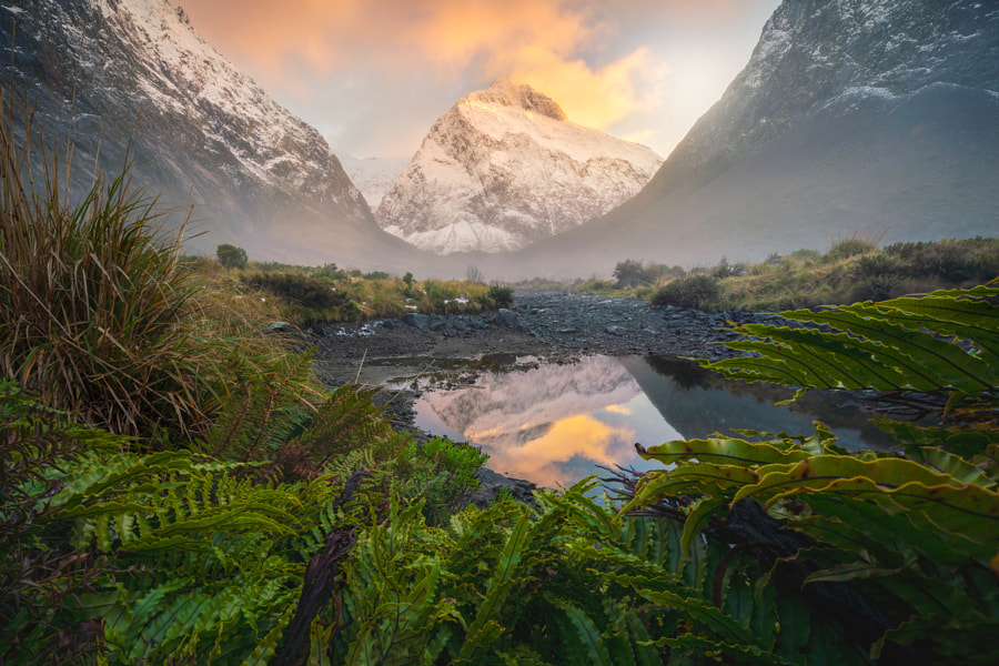 All Consuming  by William Patino on 500px.com