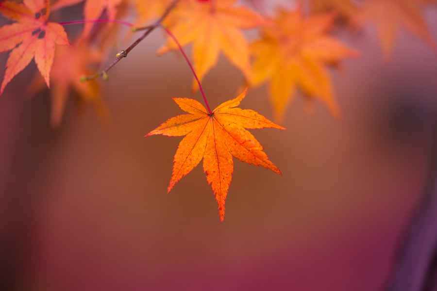 Autumn by lzh  on 500px.com
