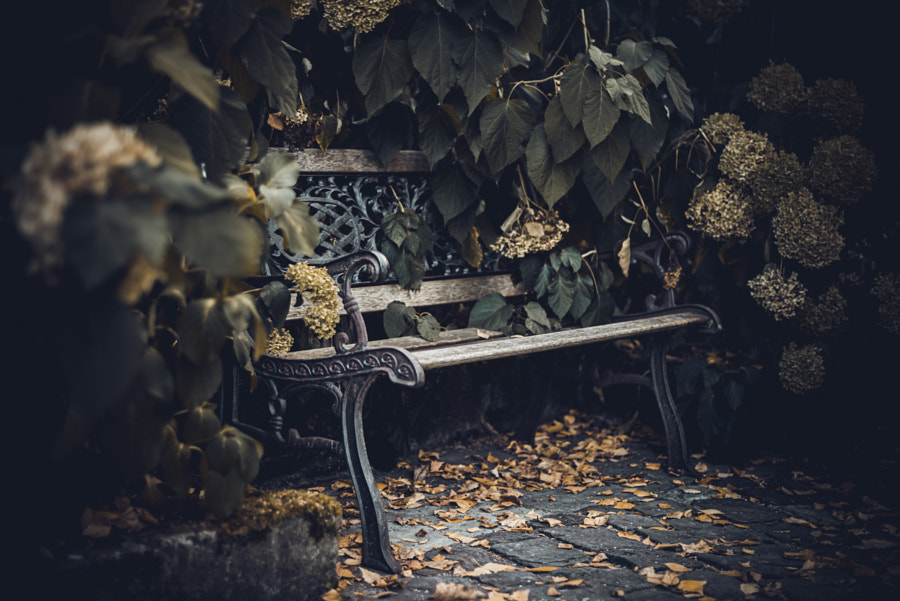 Bench by Alina Roe on 500px.com