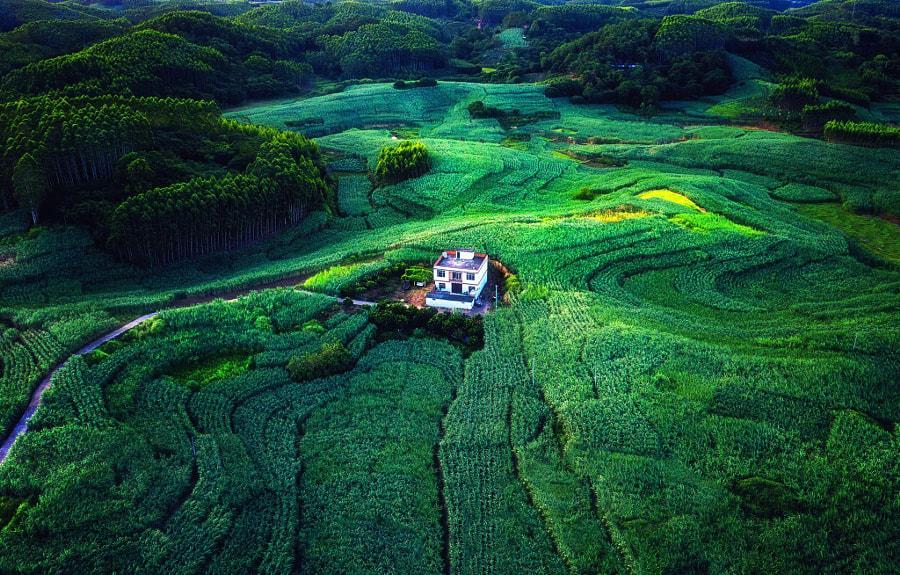 南方的甘蔗林 by 国韵  on 500px.com
