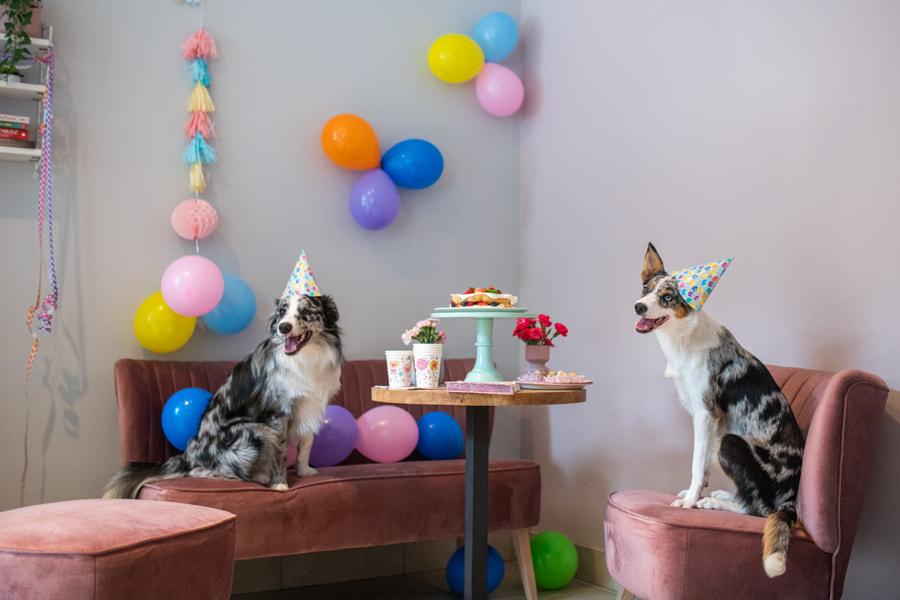 Dogs' Birthday party by Iza ?yso? on 500px.com