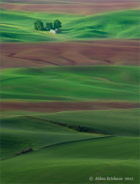 Photograph Layers of Green by Alden Erickson on 500px
