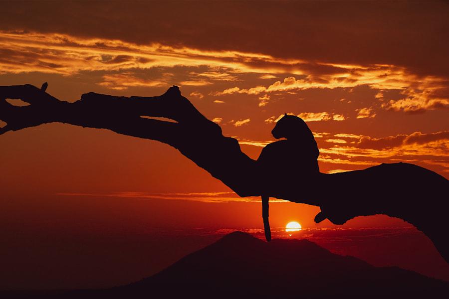 Leopard Sunrise by Furqan Ali on 500px.com