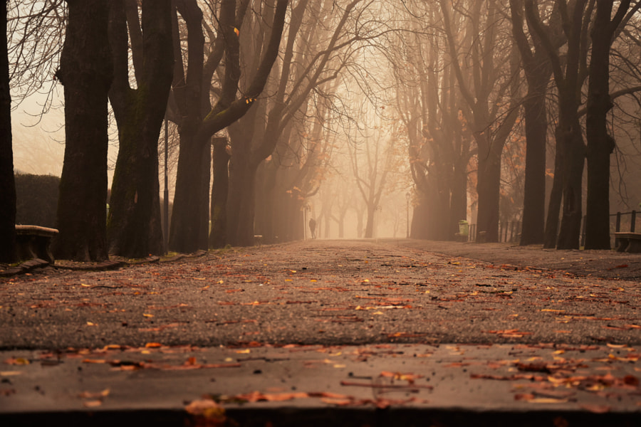 the avenue of the castle by Carlotta  Ricci on 500px.com