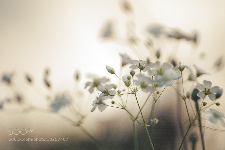Photograph Soft light by Niklas Hjelm on 500px