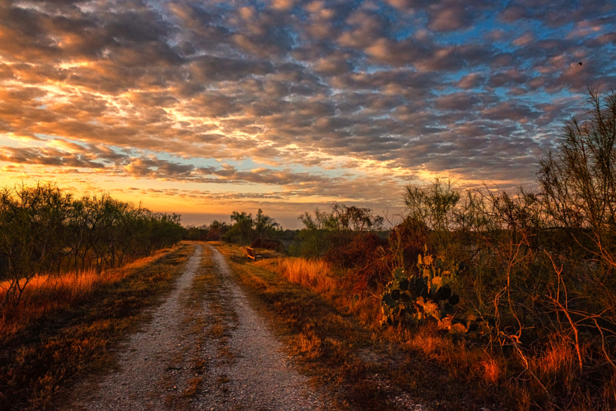 South Texas Sunrise  by Peter B. Nyren on 500px.com