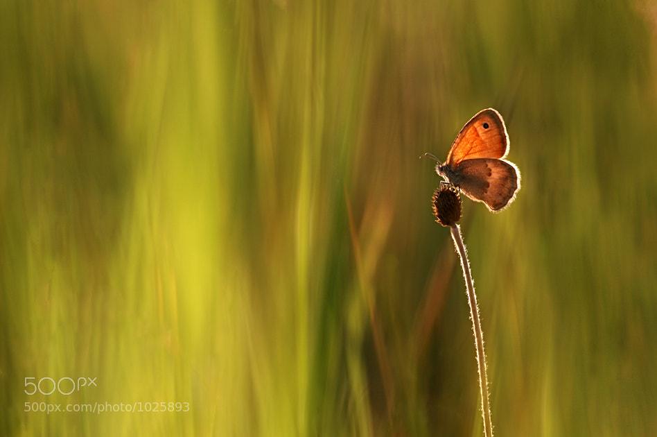 Photograph *** by Vadim Trunov on 500px