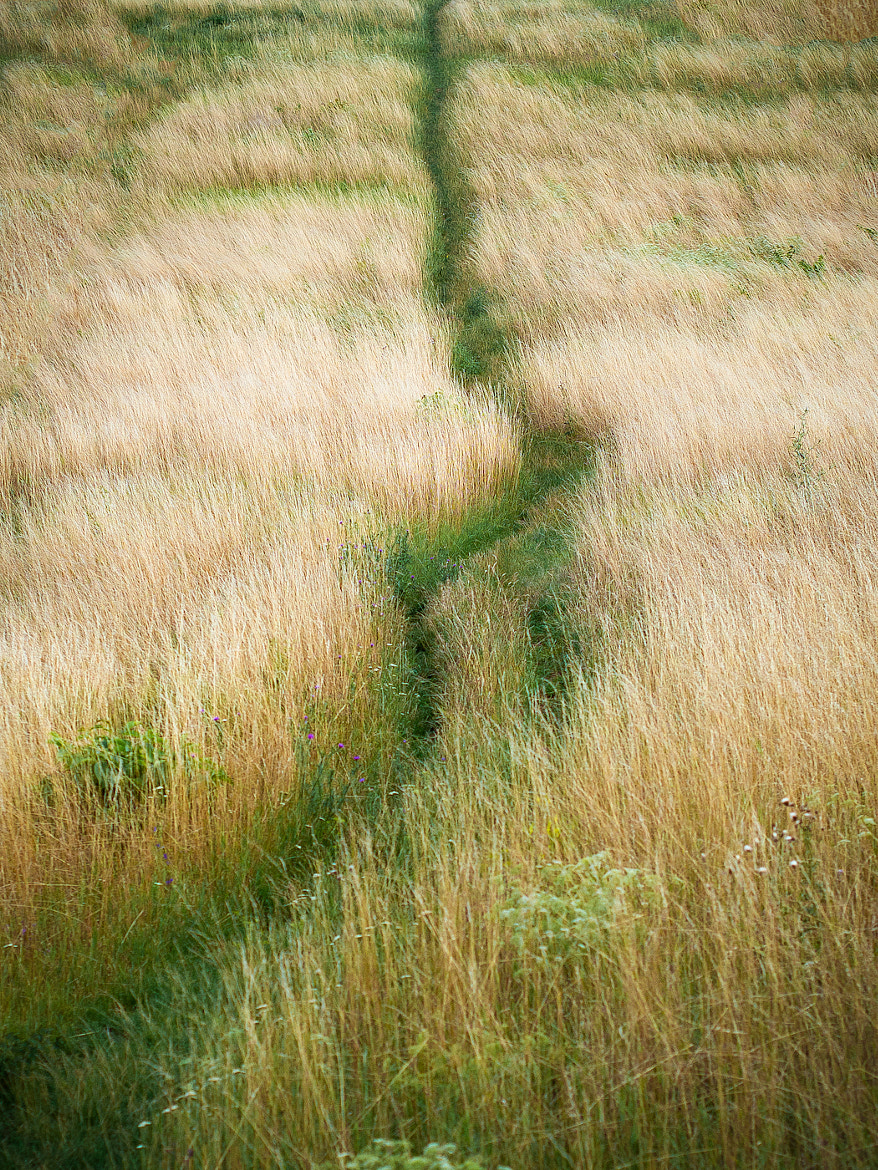 Photograph path by Paul Werner Suess on 500px